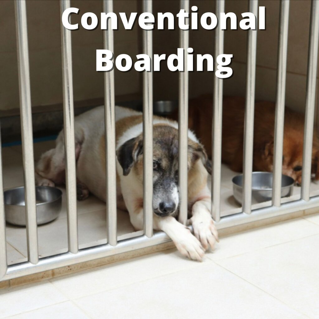 Conventional Dog Boarding